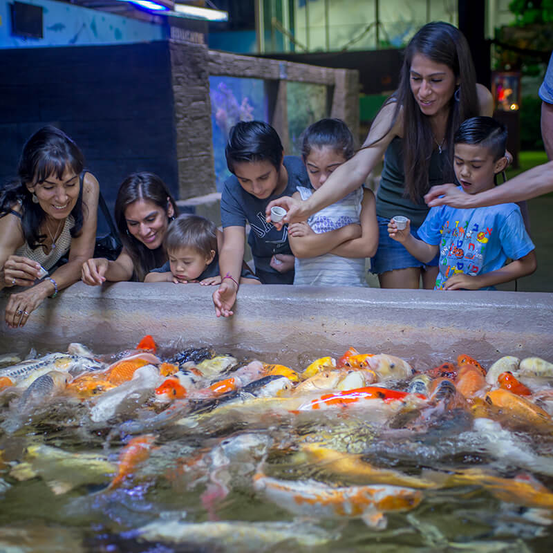 guests feeding fish
