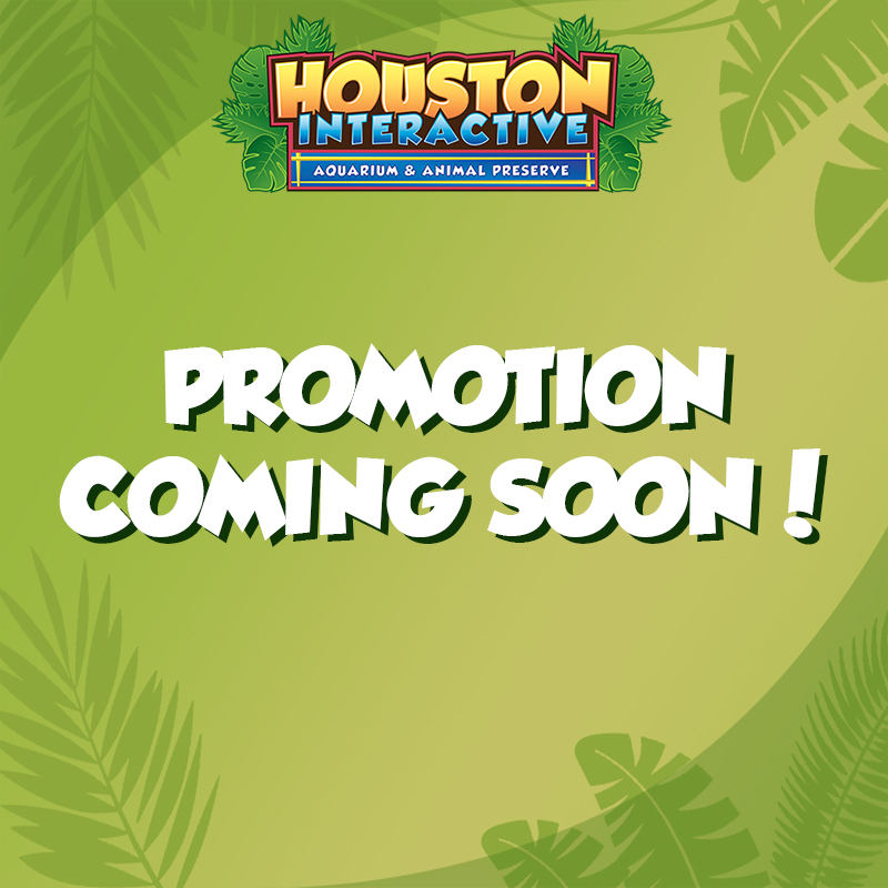 Promotion Coming Soon!